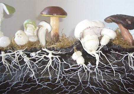 Les champignons pourront-ils sauver le monde ?