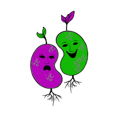 2 beans clear background