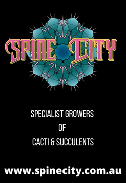 SpineCity 2021
