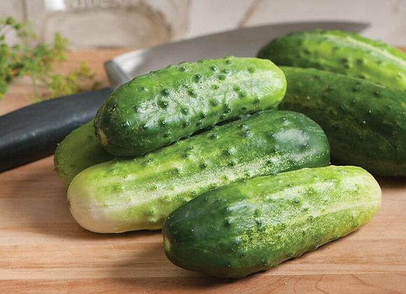Little Leaf Cucumber