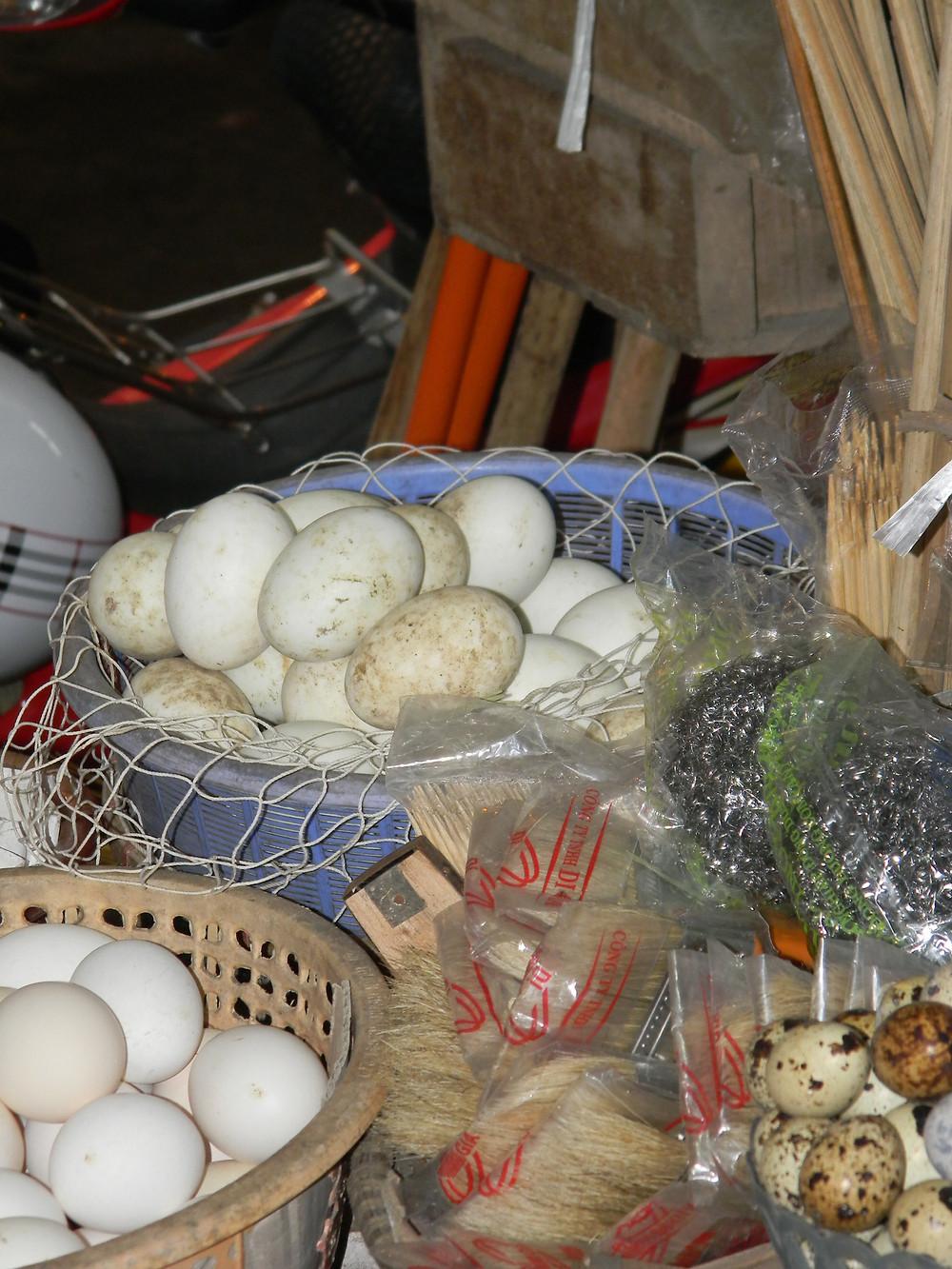 Fertilised eggs - in a net