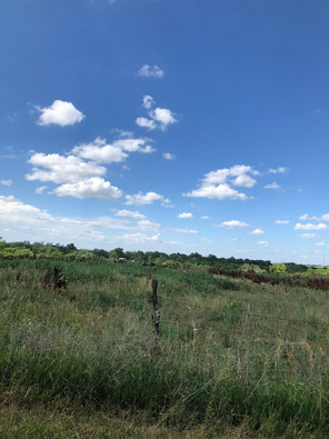 The view from the end of Reyna's driveway on a beautiful Kansas day!