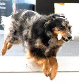 Jump, Brio, jump!
