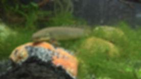 SAS Stephen Paturel promo fish-2.jpg