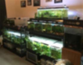 B_Fish Room.jpg