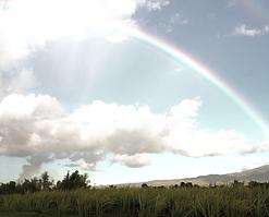 rainbow_edited_edited.png