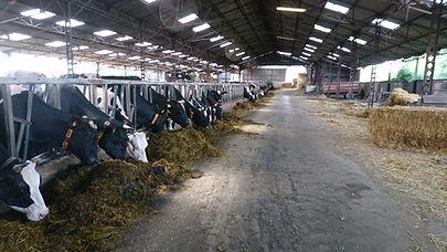 Exploitation laitière agriterres