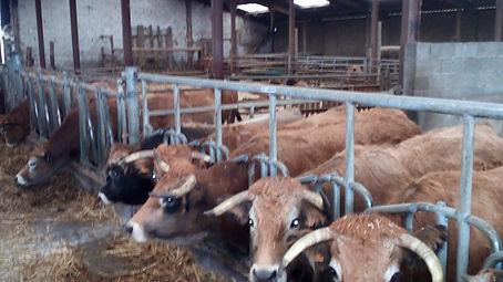 Elevage bovins agriterres