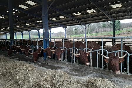 Ferme d'élevage agriterres