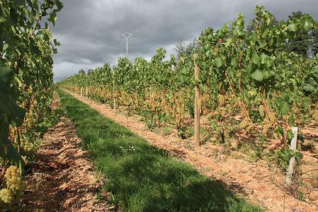 Domaine viticole agriterres