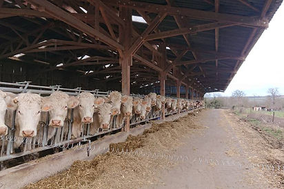 Exploitation céréales et élevage agriterres