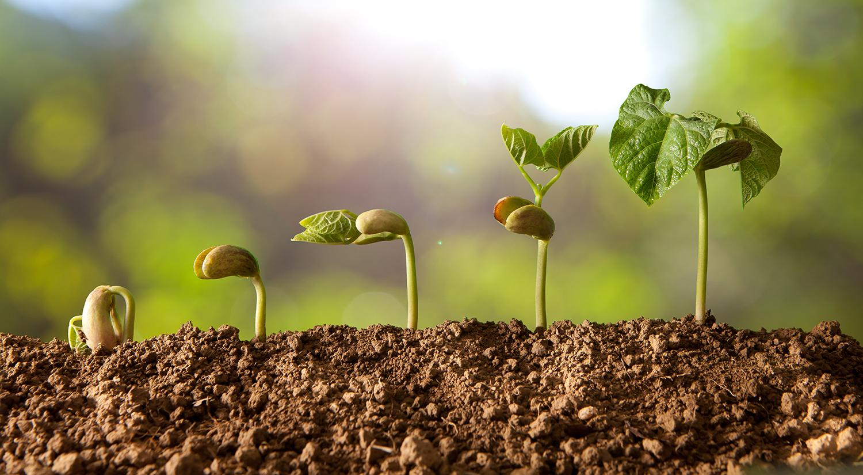 seed.-time.-harvest