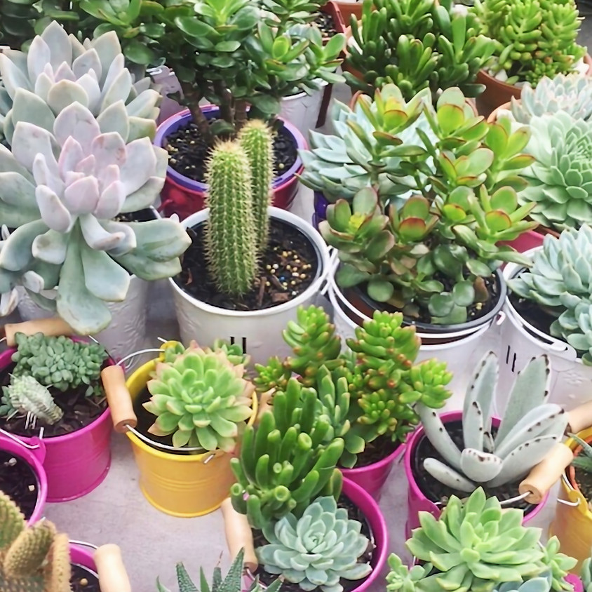 Father's Day Succulents | Hart Berry