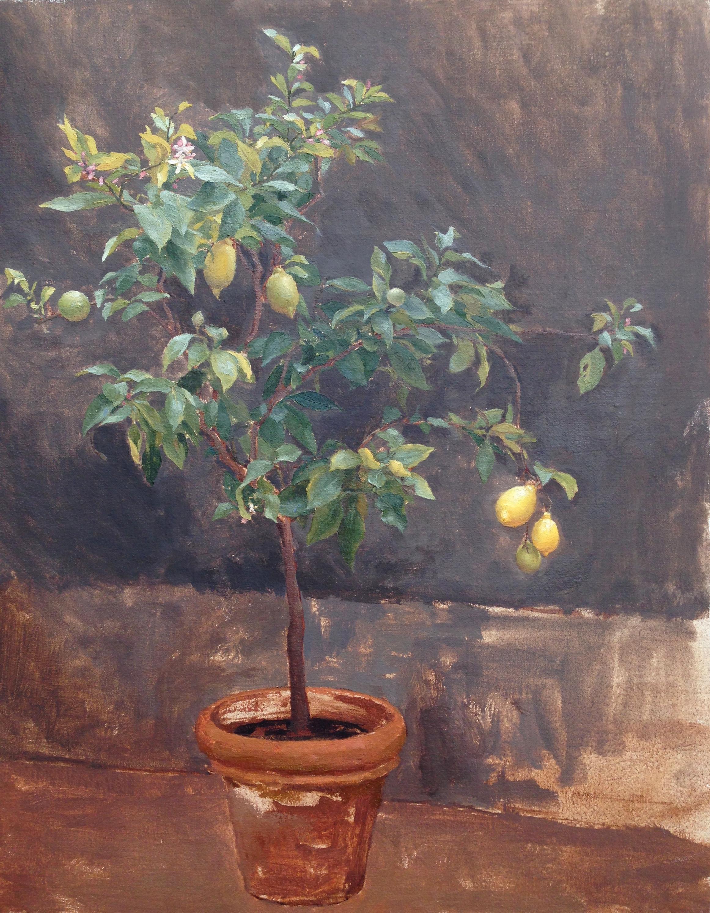 Capri Lemon Tree