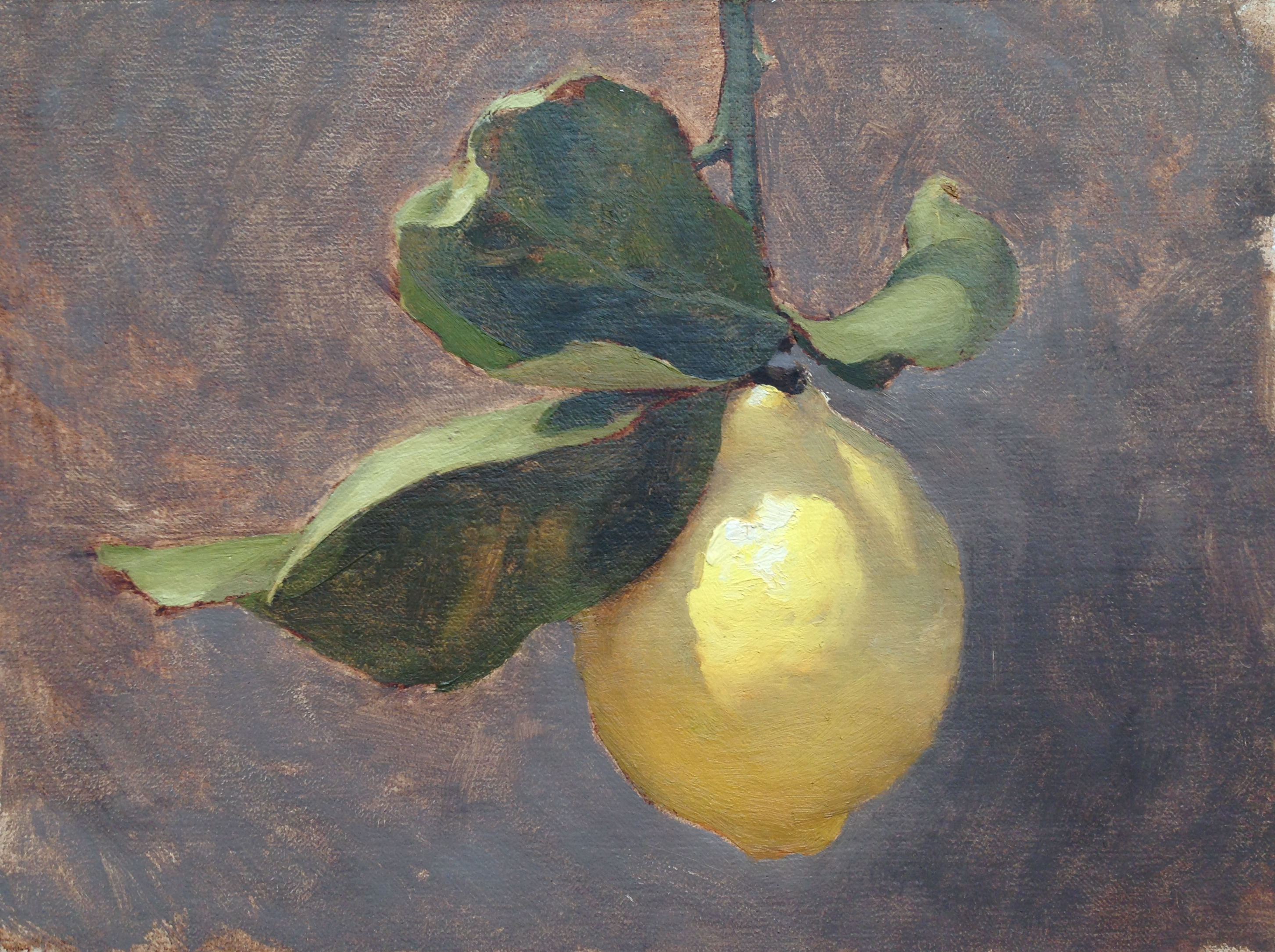 Lemon Light Study