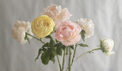 A Study of Peonies