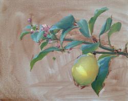 Dappled Lemon from the Bass Garden