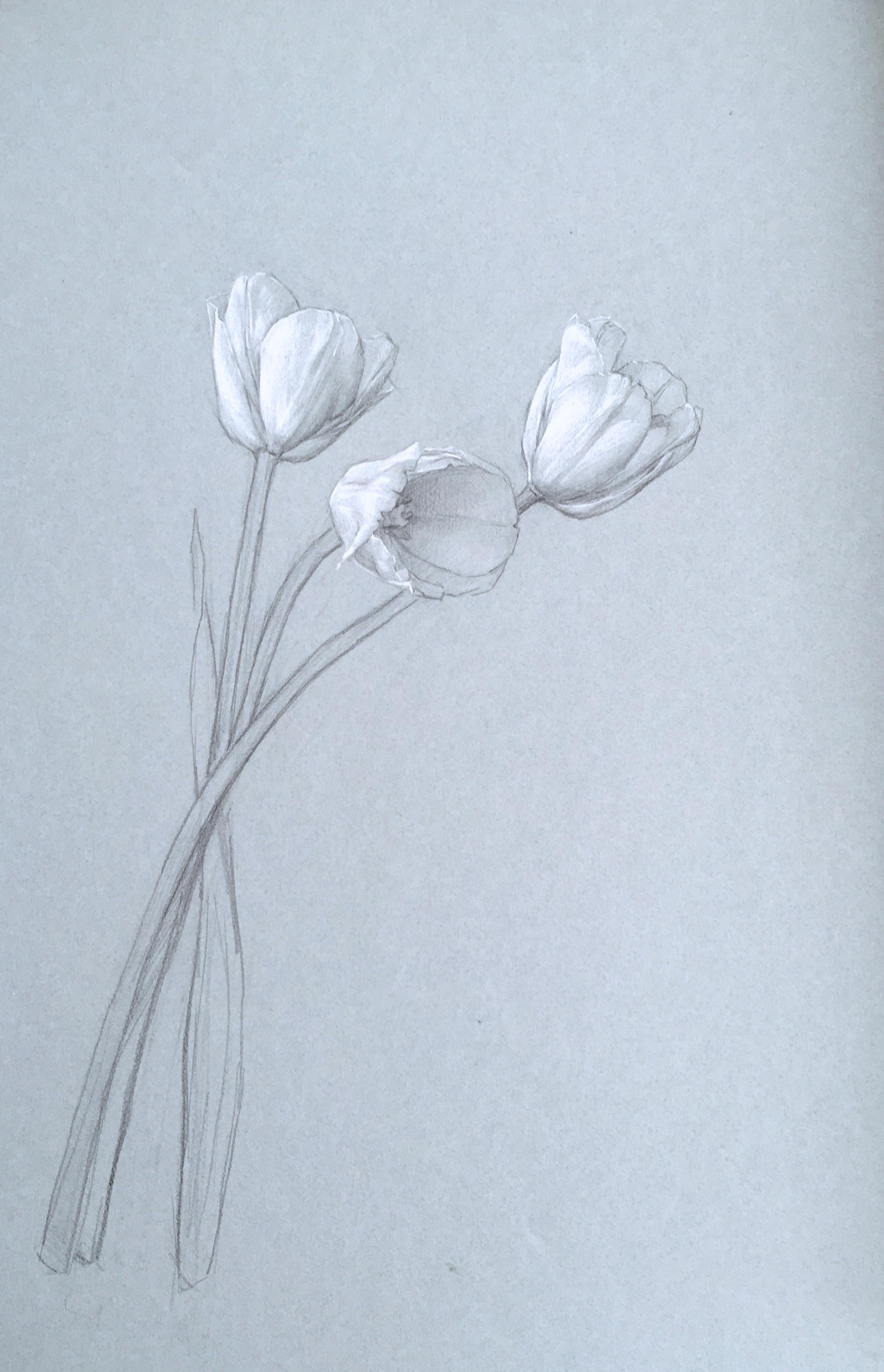 Dutch Tulips