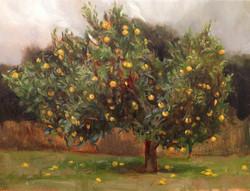 Bass Garden Orange Tree in December