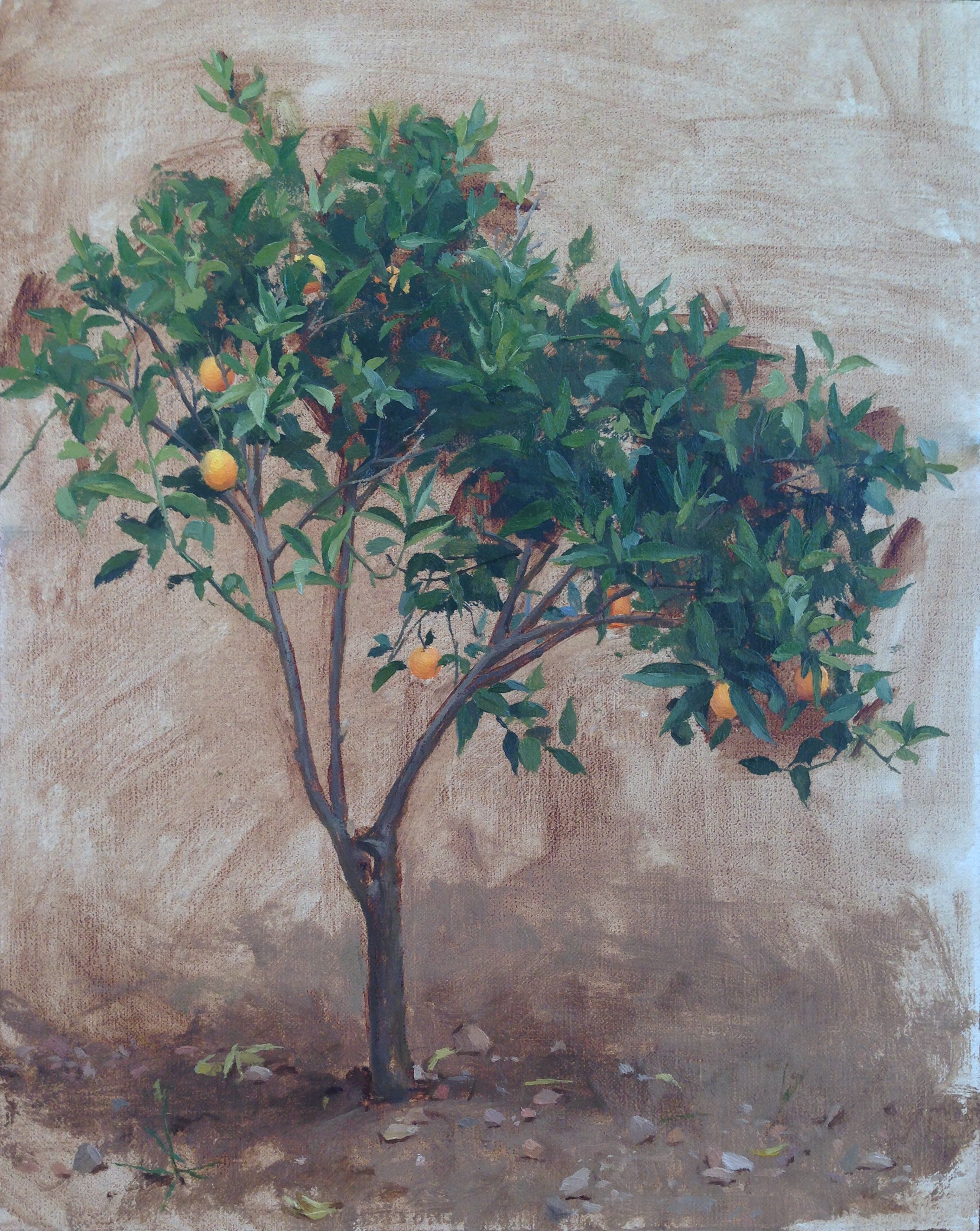 Young Orange Tree