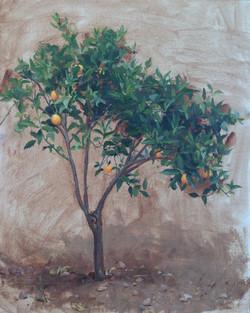 Young Orange Tree