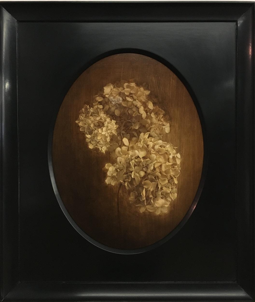 January Hydrangea