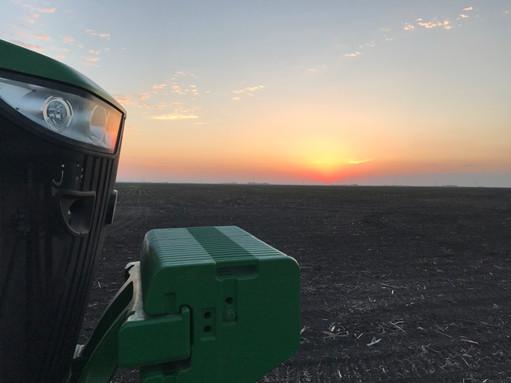 Planter Sunset