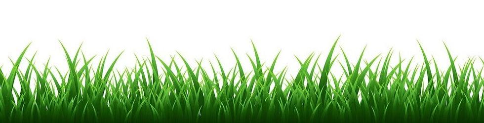 green-grass-border-set-on-transparent-ba