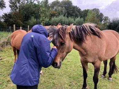 Article : les chevaux et l'équilibre intérieur