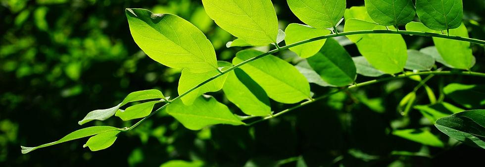 leaves-829513_1920_edited.jpg