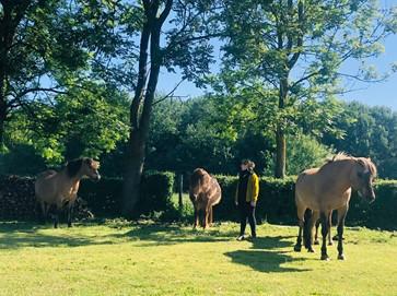 Article : En troupeau, ce que les chevaux nous enseignent sur l'équilibre