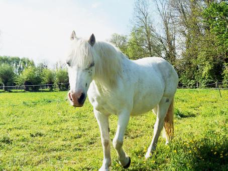 """""""Méditation et cheval... au contact du vivant"""" : samedi 19 juin 9h-11h"""