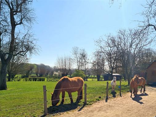 Les chevaux et les pâtures d'Auprès de mon Arbre