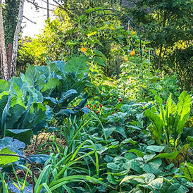 PERMACULTURE-278X278.jpg