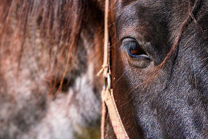 horse-4962780_1280.jpg