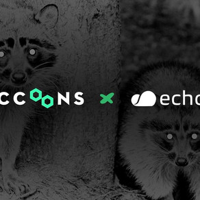 echoAR partners with The Raccoons and runs Virtual Workshop