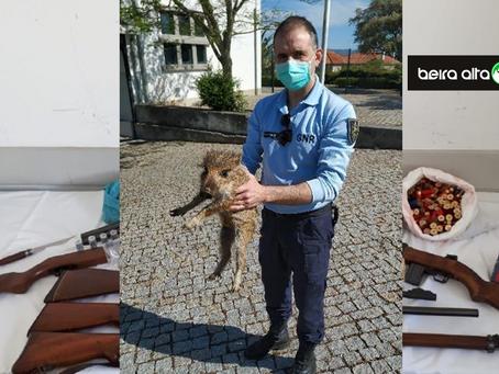Celorico da Beira: Homem detido por posse ilegal de armas de fogo e uma cria de javali em cativeiro