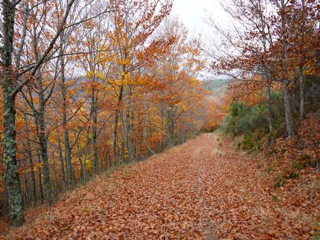 O Bosque Encantado | Faias de São Lourenço - Manteigas