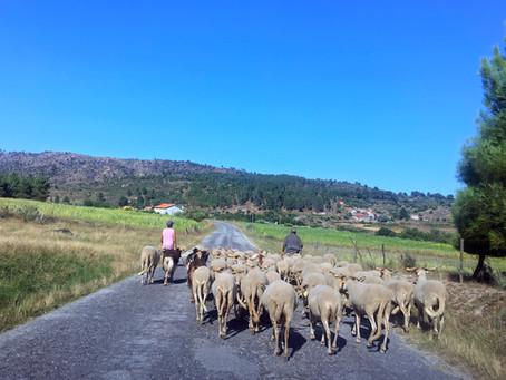 Seia promove concurso para gestão de combustível com recurso à pastorícia