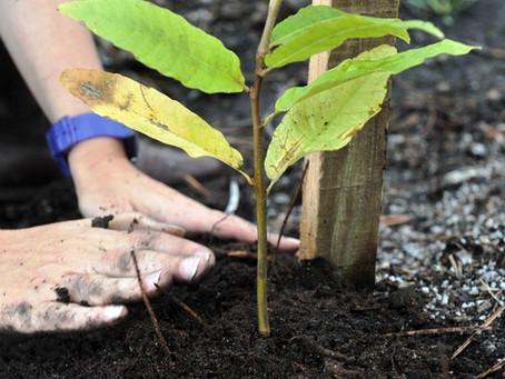 5.000 árvores autóctones vão ser plantadas pelos Municípios da CIMBSE