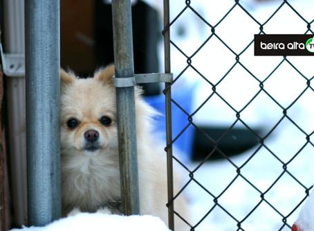 Celorico da Beira e Gouveia vão construir um Centro de Recolha Oficial Intermunicipal de Animais