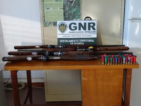 Celorico da Beira | Cinco homens identificados pela GNR por caça ilegal ao javali - Beira Alta TV