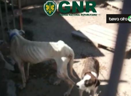 Mulher detida no concelho de Gouveia por maus tratos a 23 animais de companhia