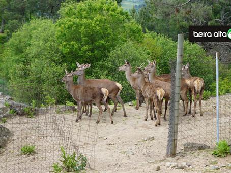 Parque Ecológico de Gouveia reabre ao público a partir de 26 de junho