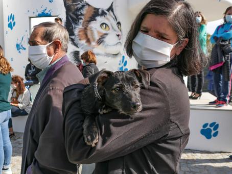Dia Aberto do Canil Municipal da Guarda incentivou a adoção responsável de cães e gatos