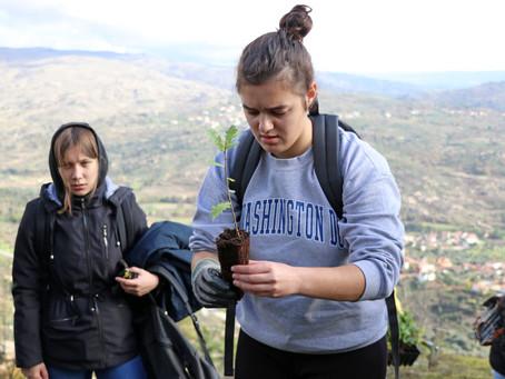 Maceira mais verde - Voluntários plantam cerca de 1000 árvores