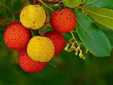 Quer ir plantar sobreiros e medronheiros em Seia? Câmara paga alimentação, transporte e seguro