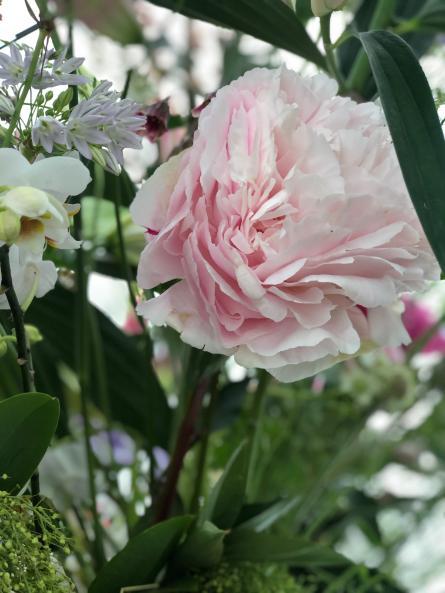 Helens lovely flower display