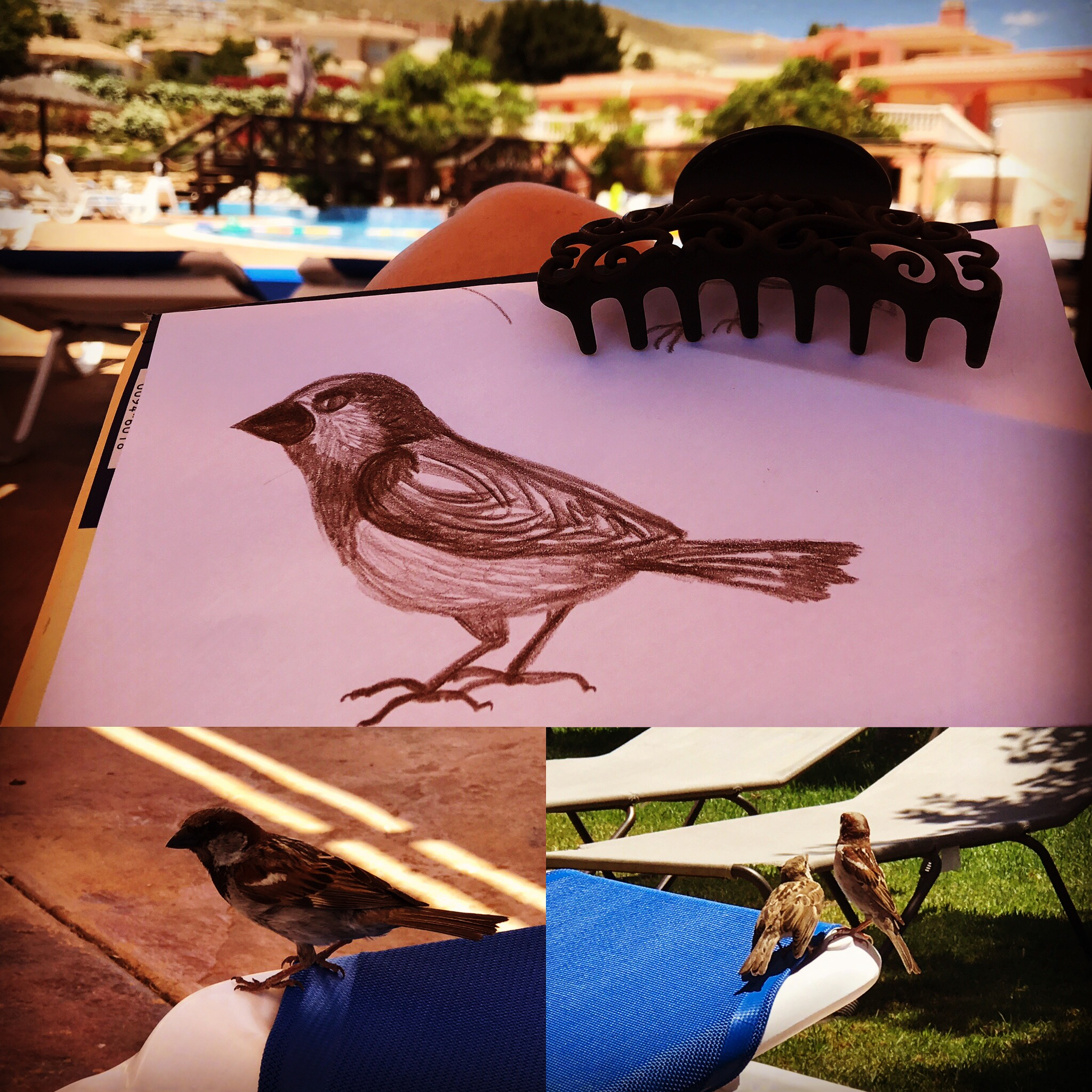 SarahJayne Art Finch by the Pool Alicante