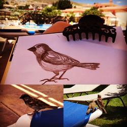 SarahJayne Art Finch by the Pool Alicante